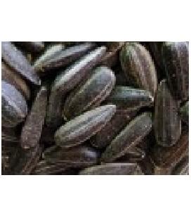 girasol para germinados (semillas ecológicas)