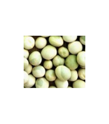 guisante para germinados (semillas ecológicas)
