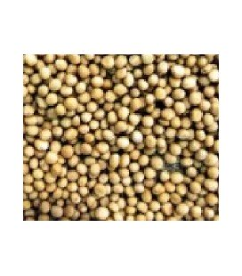 mostaza blanca para germinados (semillas ecológicas)