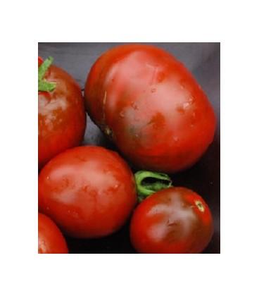 semillas tomate Nyagous