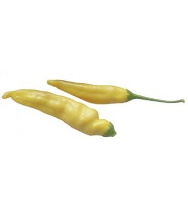 chile gota de limón (semillas ecológicas)