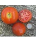 tomate moneymaker (semillas ecológicas)