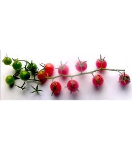 tomate salvaje argentino (semillas ecologicas)