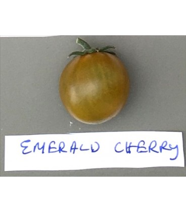 tomate emerald cherry (semillas ecológicas)
