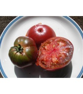 tomate black russian (semillas no tratadas)