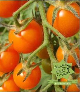 tomate mandarin orange