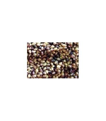 trebol rojo (semillas para germinar)