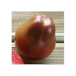 plantel tomate japanese black trifele