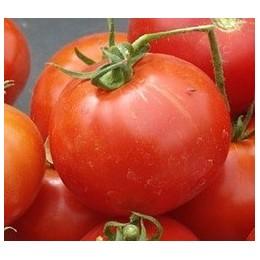 tomate glacier