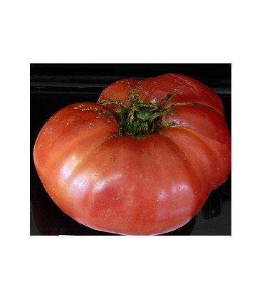 tomate giant tree