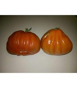 tomate corazón de buey (acostillado)
