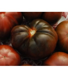 tomate brandywine negro - plantel