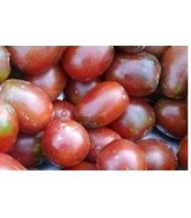 tomate ciruela negra - plantel