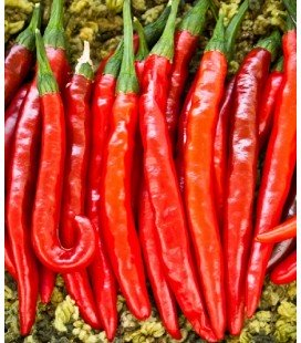 pimiento cayena picante - planta