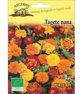 Tagetes patula- semillas ecológicas