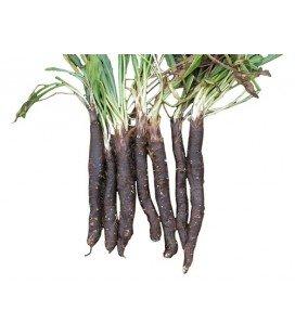 scorzonera gigante de Rusia (semillas ecológicas)