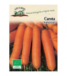 zanahoria nantesa (semillas ecologicas Arcoiris)