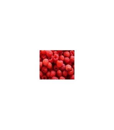 planta de frambueso rojo en maceta