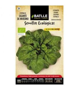 espinaca gigante de invierno - semillas ecológicas batlle