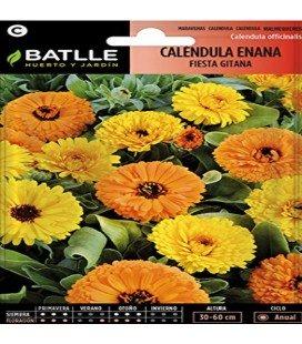 calendula doble enana Gitana (Calendula officinalis)