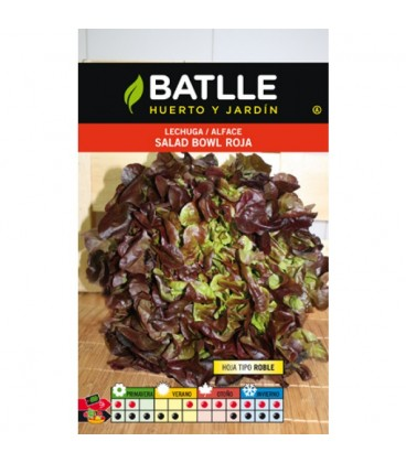 lechuga salad bolw rossa