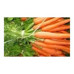 plantel de zanahoria