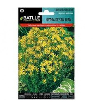 semillas de hIperico - (hypericum perforatum)