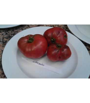 tomate carbón