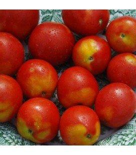 tomate alaskan fancy