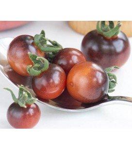 tomate Indigo blue berries