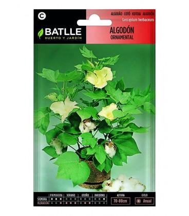 algodón ornamental (gossypium herbaceum)