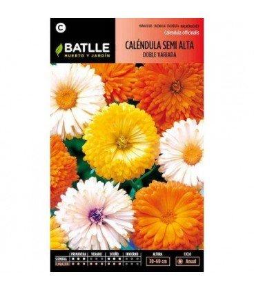 calendula semi alta doble variada (Calendula officinalis)