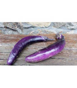berenjena Ping Tung Long (semillas sin tratamiento)