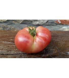 tomate Pasiego