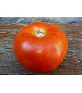 tomate aker´s west virginia