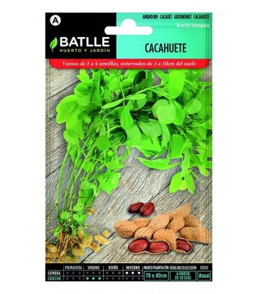 semillas de cacahuete