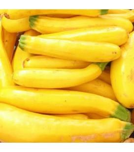 calabacín amarillo Atena Polka F1
