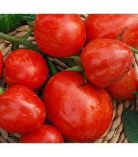 tomate Elberta girl