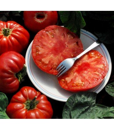 tomate Pruden´s purple