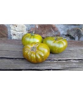 plantel de tomate Verde de las Landas