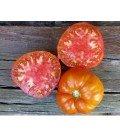 plantel de tomate antiguo de Valdeporres
