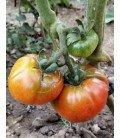 plantel de tomate Aretxableta