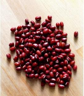 Adzuki rojo - soja roja (Vigna angularis) semillas ecológicas