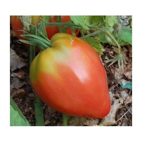 semillas de tomate Anna Russian
