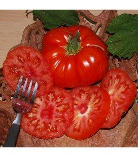tomate super Marmande - semillas no tratadas