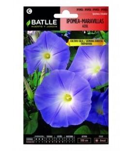 ipomea maravillas azul (Ipomoea tricolor)