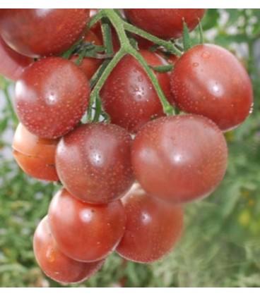 tomate cherry chocolate