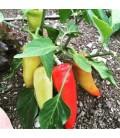 pimiento hungarian hot wax (semillas ecológicas)