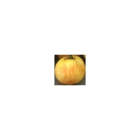 semillas de tomate melocotón - cocomas