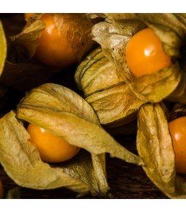 physalis peruviana gold (semillas no tratadas)